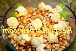 5 lbs of Mushroom Popcorn Kernels ** FREE SHIPPING ** Make y